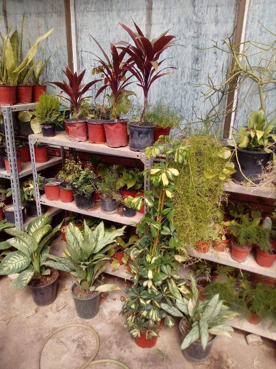 معرض  لبيع الشتلات النباتية والزهور في كلية التقنيات الاحيائية