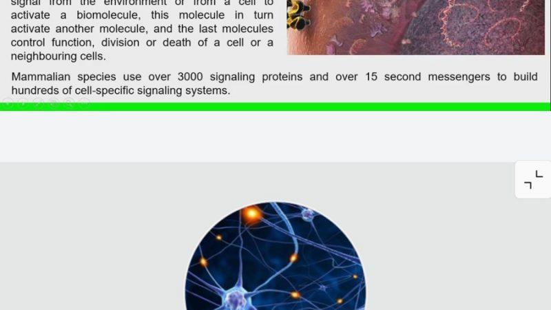 الخلايا الجذعية ومسارات الإشارات الخلوية